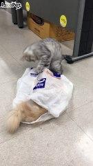 비닐봉투와 고양이