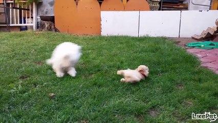 겸둥이 강아지들이 노는 방법!
