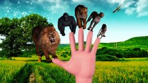 Learn Wild Animals Sounds Action Fight 3D Animals Finger Family Song Dinosaurs Cartoons for Children