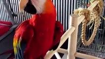 FUNNY PARROTS Worlds BEST Talking Parrots