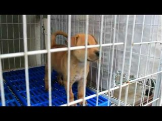 SPCA Penang Visit 2012 by Young Social Star (  Puppy Footage)