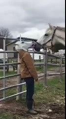Un cheval rencontre une tête de licorne