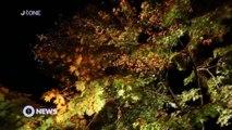 [Nyûsu Show] L'Automne japonais en pleine nuit