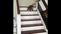 Amputé de deux pattes, ce chat a malgré tout appris à marcher, courir et sauter