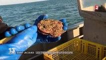 Saint-Malo : ils pêchent la coquille Saint-Jacques en douceur en plongeant