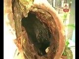 Dengue Mosquito larvae found in South Point School premises,