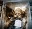 Morte depuis 96 ans, cette petite fille ouvre les yeux !