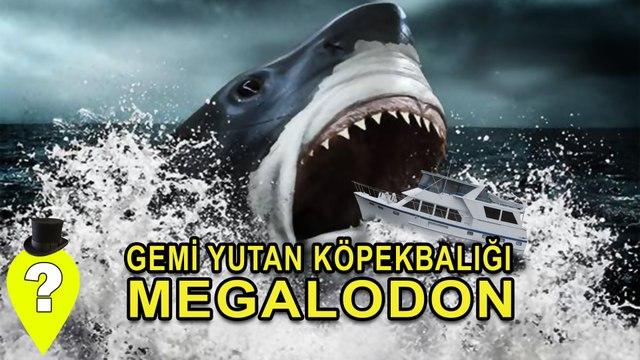 Gemi Yutan Köpekbalığı : Megalodon