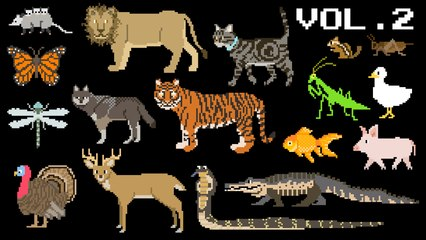 Animals Collection Volume 2 - Farm Animals, Mammals, Pets, Reptiles - The Kids' Picture Show