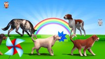3D Dog Family Finger Song | Dog Wolf, Dog Barks,( White, Black, Brown) Big dog Bark Walk Snif 3d