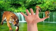 Animals Tiger Finger Family Nursery Rhymes For Children | Tiger Cartoons Finger