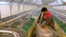 Lapins : La cuniculture en difficulté (Vendée)