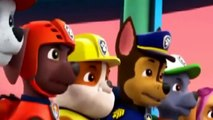 Paw Patrol Full Episodes - Pups Save a Wedding - Pups Save the Diving Bell