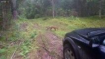 Ce con balance ses clés pour attirer un renard... Et le renard se barre avec!