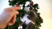 Hilarious Video Cat Ruining Christmas, Breaking Ornaments, Destroying the Christmas Tree