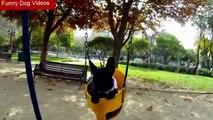 Funny Puppy Dog Videos - Funny Dog Videos - Dog Funny Video