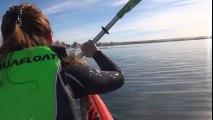 Un kayak soulevé par une énorme baleine