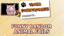 Random animal fails, that will make you laughing till crying! - Pets, birds and much more - Enjoy-wodqaC9NRI0