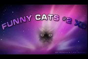 FULL FUNNY DOG AND CATS 2016 - Funny Cats - Funny Dogs & Animals - Animals Funny