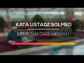 Kata Ustadz Solmed - Belajar Dari Hewan
