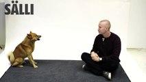 Des chiens réagissent aux aboiements d'humains