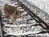 Lucy rimane incastrata tra i binari del Treno e Panda non la lascia da sola neanche un Istante!