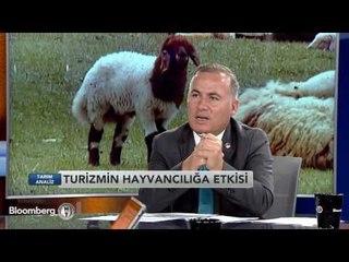 Tarım Analiz   Küçükbaş Hayvancılık   7 Eylül 2016