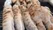 Amazing Street Food, Khmer Street Food, Asian Street Food, Cambodian Street food #20