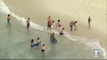 Peche miraculeuse pour ces touristes dans ce banc de poisson près de la plage