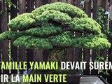 Le pin de Yamaki, ce bonsaï planté en 1625 qui a survécu à Hiroshima et continue de prospérer (vidéo)