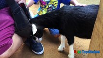 ANIMALS POOPING AT THE ZOO Kid at the ZOO Funny Family Fun Trip to Petting Farm Animals for C