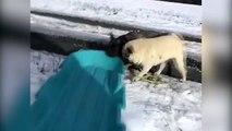 I Cani e la loro prima volta sulla Neve
