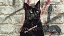 10 signes qui prouvent que votre chat veut vous tuer !