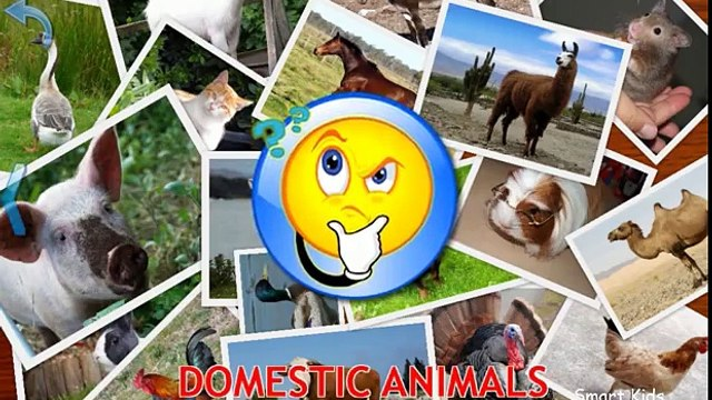 Animals for Kids   Domestic Animals for Kids   Learn Animals   Animals in English