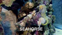 Sea Animals for Kids   Sea Animals Videos for Children Part 1   Learn to Spell Sea Animals Names