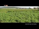 Orda Bir Köy Var Uzakta (Başkurdistan/Ufa) - TRT Avaz
