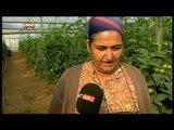 Antalya Aksu'da Bir Domates Serasındayız - Yeni Gün - TRT Avaz