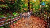 Super Pets Dog Finger Family Rhymes | Deer Animals Finger Family Nursery Rhymes | Educational Songs