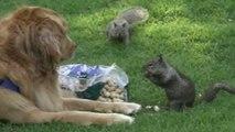 Des écureuils tellement drole - Compilation d'animaux marrant