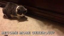Meme les chats prennent de bonnes résolutions pour 2017 - Cat Compilation