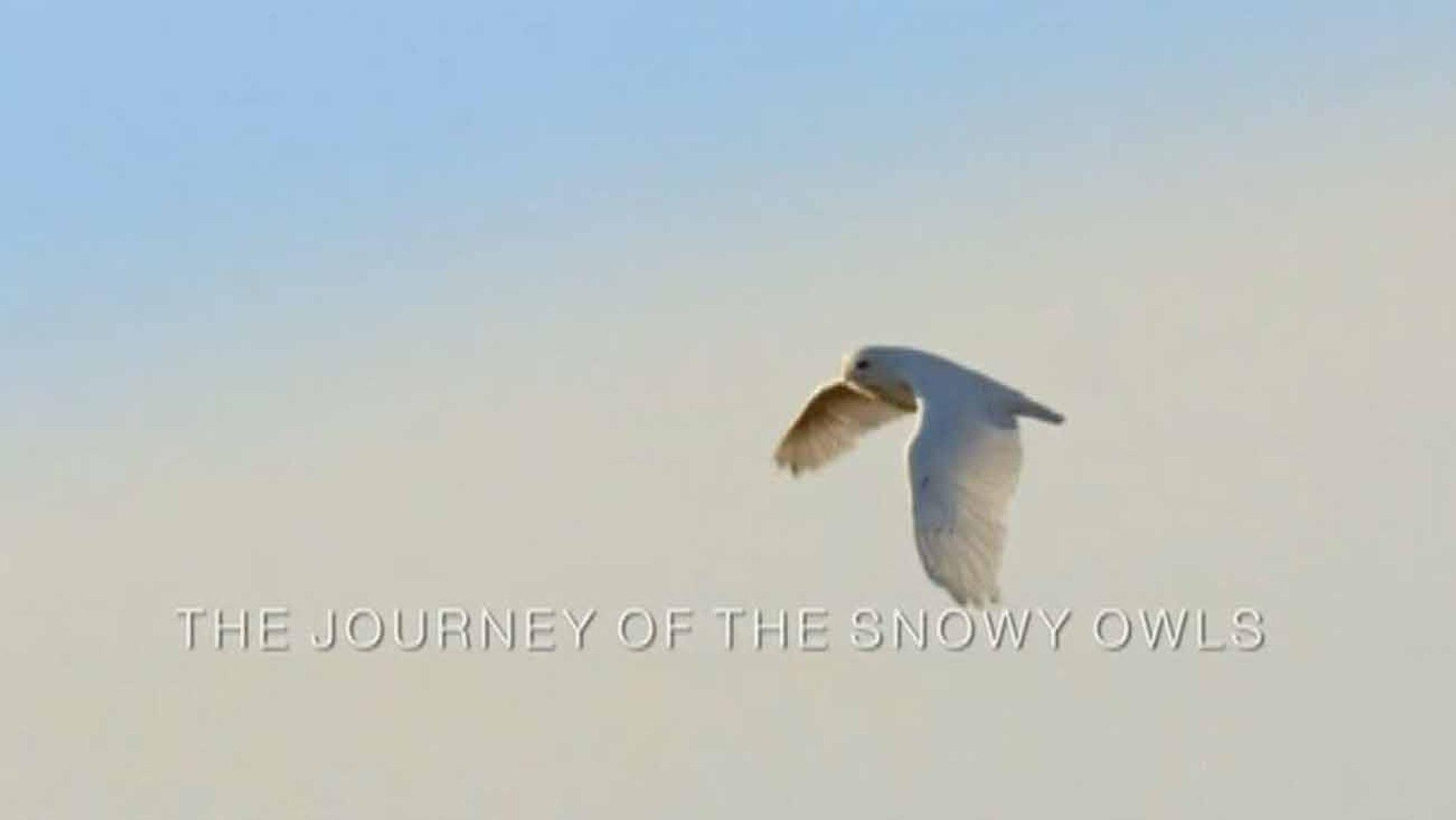Зимняя сказка. Путешествие полярных сов / A winter's Tale: The Journey of the Snowy Owls (2015)