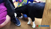 ANIMALS POOPING AT THE ZOO Kid at the ZOO Funny Family Fun Trip to Petting Farm Animals for Chi