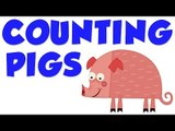 Counting Pigs| Learn to count numbers from 1 to 4