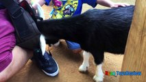 ANIMALS POOPING AT THE ZOO Kid at the ZOO Funny Family Fun Trip to Petting Farm Animals f