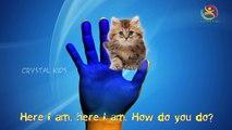 Funny Cat Finger Family 3d rhymes   Tom cat finger game Nursery kids rhymes