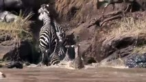 20 CRAZIEST Animal Fights Caught On Camera - Most Amazing Wild Animal Attacks