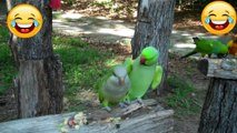 Very Smart Birds - funny bird videos