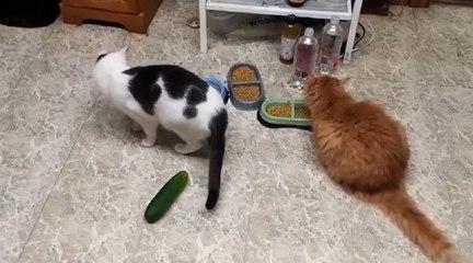 Avez vous déjà essaye de mettre un concombre ...