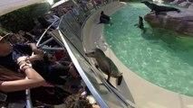 Sea Lion & Seal Exhibit - SeaWorld San Diego