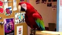 Kids Dance Party - Dancing dog - Dancing Bird - Funny Dancing Gorilla